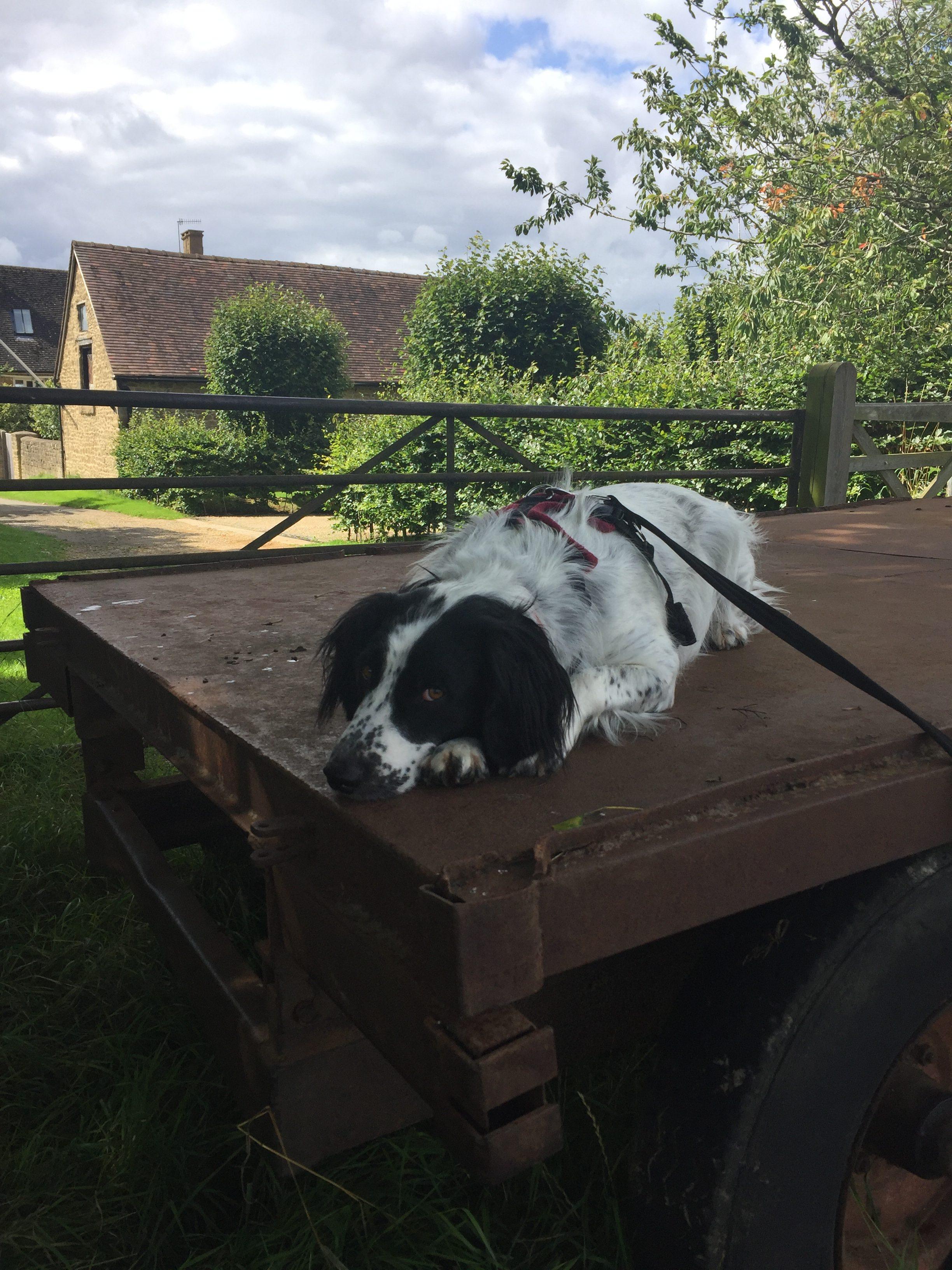 puppy-dog-trainer