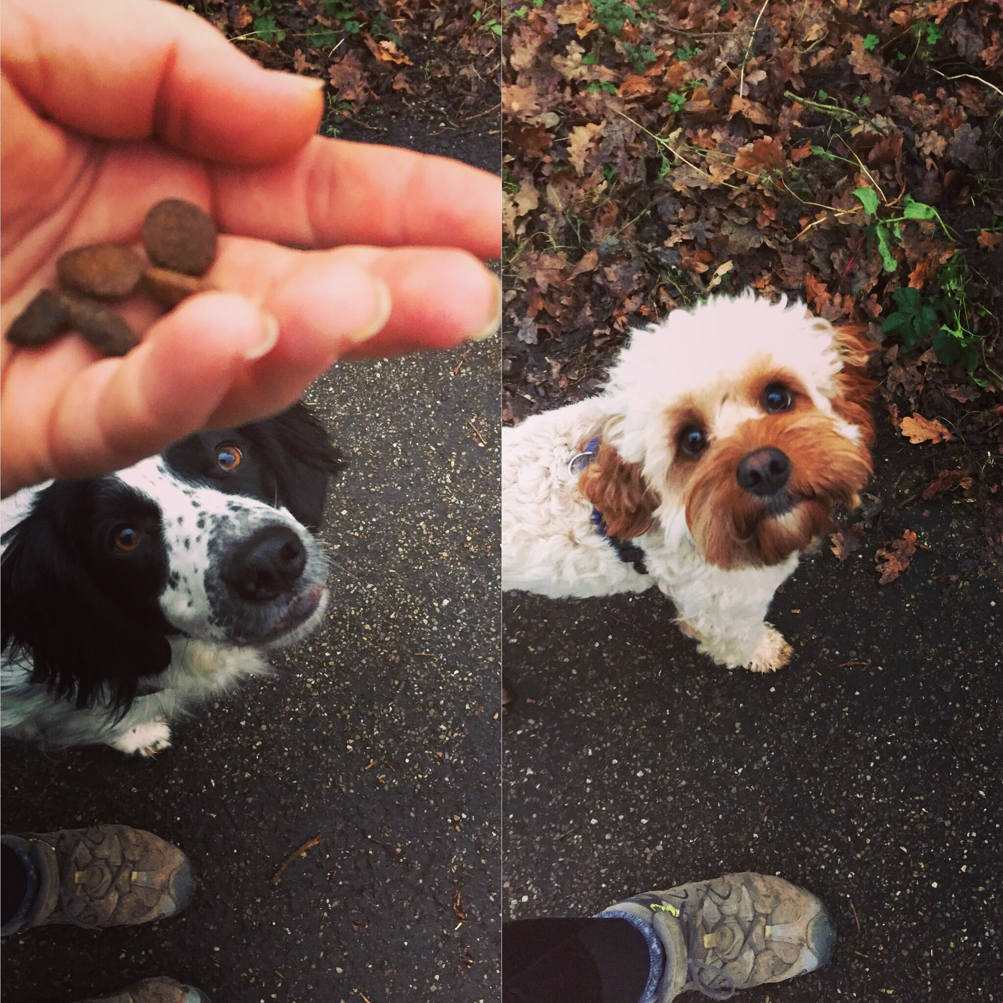dog training magic hand