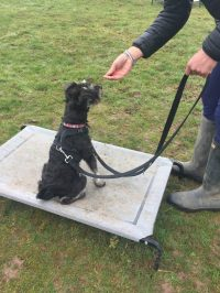 warwickshire dog training classes