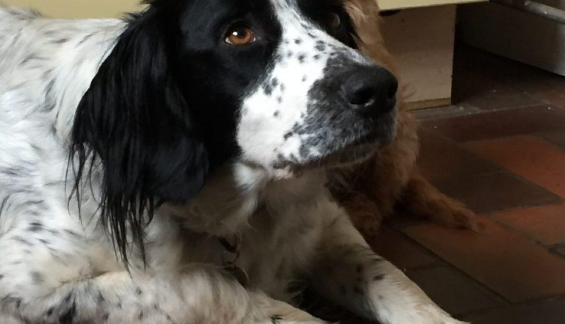 crate-dog-training