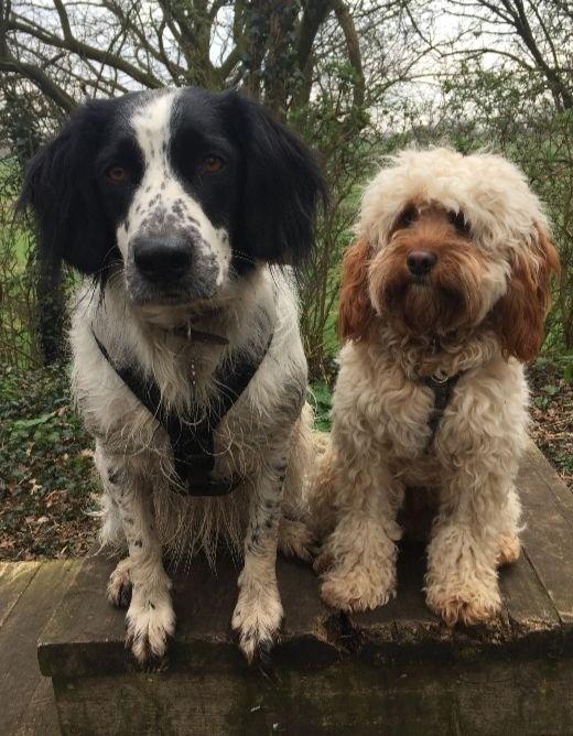 dog-walking-kenilworth-greenway