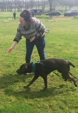 leamington spa dog training classes