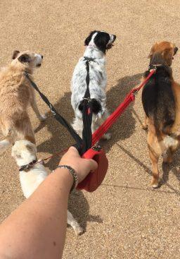dog walker covetnry
