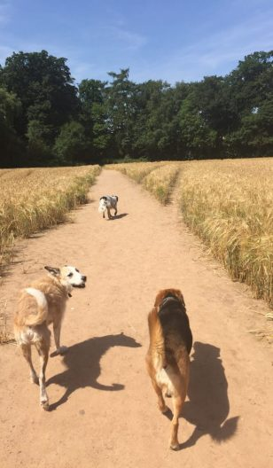 dog walking adventures coventry