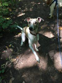 coventry dog walker