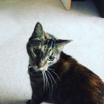 cat sitting coventry
