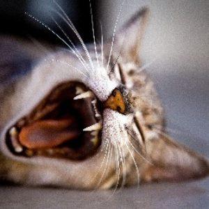 cat feeding service coventry