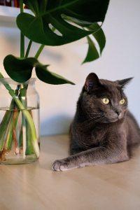 Cat feeding coventry