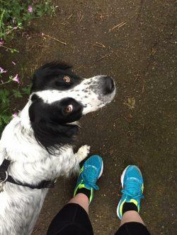 dog running adventures